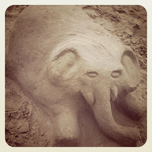 Elephant at beach