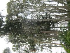 IMG_2657 (Ninoshka2011) Tags: crdoba humedal