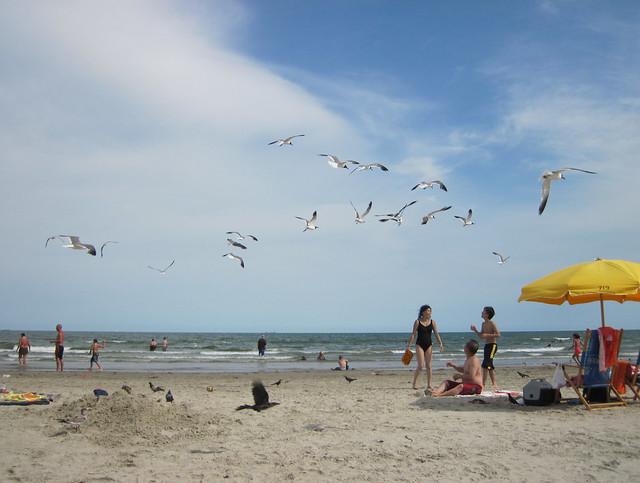 D1 seagulls