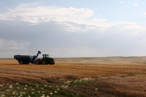 Water setting fields is not an uncommon sight in Faulkton.