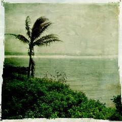East Side Moloka'i II (Aloha DebbyRose) Tags: ocean tree texture photoshop vintage hawaii pacific side palm east molokai flypaper