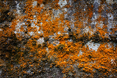 "2011_604048 - Lichens • <a style=""font-size:0.8em;"" href=""http://www.flickr.com/photos/84668659@N00/6034928720/"" target=""_blank"">View on Flickr</a>"