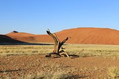 The Namib Desert (Mick Byrne) Tags: dunes namibia sossusvlei namibdesert namibnaukluft