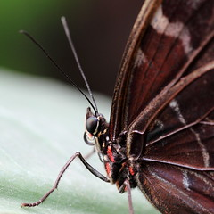 butterfly (YH Photography) Tags: macro nature animals butterflies insects vlindertuin