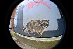 Paper Coon (Wires In The Walls) Tags: streetart pastedpaper animal norwalk connecticut wheatpaste ct wideangle raccoon natureinthecity fakenature lilbandit
