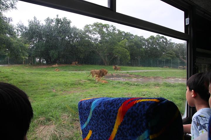 六福村動物園039