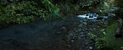 Tranquil Stream (alishariat) Tags: longexposure travel blue newzealand green water pool forest river bush woods stream scenic adventure pebble auckland zealand intrepid bushwalk treck waitakere piha adventureshoes alishariat