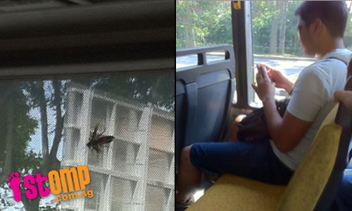 Dangerous prank: Man releases large hornet on bus, causing panic