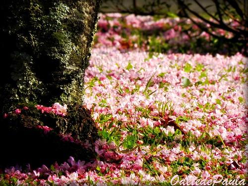 Dans mon jardin d 39 hiver pour votre t p1 a2 flickr for Mon jardin 3d
