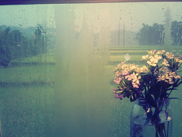 1000713 雨好大