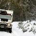 O Lobo, camuflado na neve