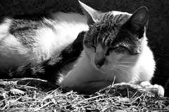 The One Who Survives (Giancarlo Nuccio) Tags: summer cats art animal artistic garage finepix sicily fujifilm hd palermo cantina gatti sicilia giancarlo ruderi 2500hd nuccio s2500hd nerho giancarlonuccio nerho84