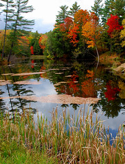 Afternoon Near Westport (hectic skeptic (Gone Until mid-September. On The R) Tags: trees red orange lake ny reflection fall water yellow pond fallcolors adirondacks upstatenewyork colorfulleaves