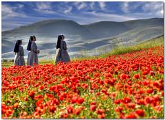 The mistery of the entranced nuns (Nespyxel) Tags: 3 sisters landscape three sister nun poppies tre hdr entranced castelluccio suore engrossed tonemapping papavery nespyxel stefanoscarselli tufototureto religiousmeditation