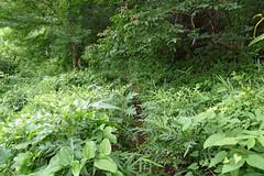 新治市民の森(観察路)(Niiharu Community Woods, Yokohama, Japan)