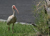 Day 201