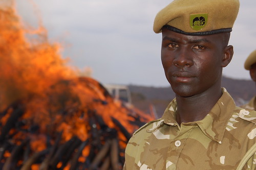 KWS Ranger and the flaming ivory