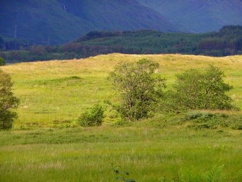 Summer in the Scotish Highlands by Ginas Pics