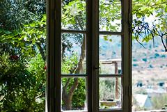 (ishaip) Tags: plant flower green window colors 50mm israel bokeh indoor magda 50mmf18