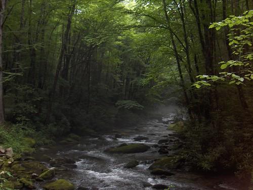 HPIM1273-Woods, River, Mist