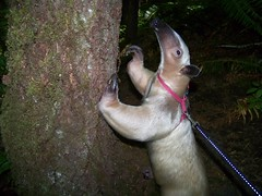 Pua checks out a tree