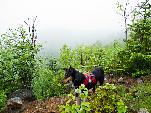 A soggy Colvin doing what trail dogs do