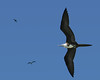 Day 204