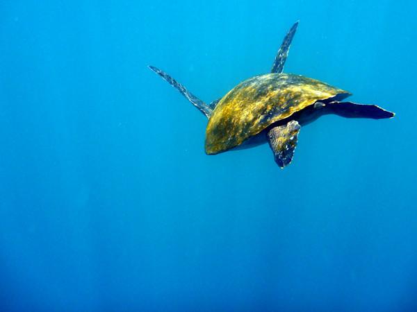 RYALE_Galapagos_Underwater-15