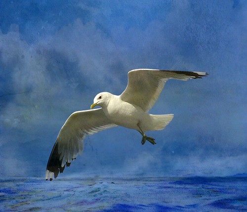 Gull in the North Sea by mamietherese1