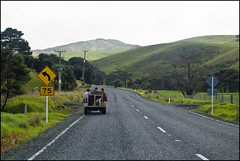 Driving on State Highway 1 to Cap Reinga