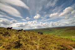Dartmoor Ponies (rosyrosie2009) Tags: uk england walking landscape photography photos wideangle devon tamron dartmoor hdr bronzeage westcountry westernmorningnews photomatix grimspound tonemapped dartmoorponies warrenhouseinn devonandcornwall d5000 rosiesphotos westernmorningview nikond5000 tamronspaf1024mmf3545diiildasphericalif headlandwarrenfarm rosiespooner rosyrosie2009 rosemaryspooner rosiespoonerphotography