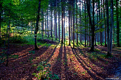 Im Wald - EXPLORE (dorena-wm) Tags: trees light shadow sun tree green backlight forest licht linie laub line explore grn sonne wald bume schatten baum gegenlicht baumstamm strahlen mygearandme mygearandmepremium mygearandmebronze mygearandmesilver mygearandmegold dorenawm mygearandmeplatinum mygearandmediamond dblringexcellence tplringexcellence artistoftheyearlevel3 artistoftheyearlevel4 artistoftheyearlevel5 artistoftheyearlevel7 artistoftheyearlevel6