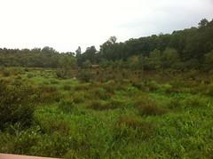 Swamp - Lower Deck