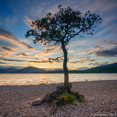Loch Lomond Lone Tree (OnlyEverOneJack) Tags: sunset sun set bay scotland exposure angle sony wide hard sigma wideangle shore nd loch grad lomond legacy hitech lochlomond density neutral sigmalens a900 millarochy sigma1735mm sonyalpha millarochybay hardgrad sonyalphaa900
