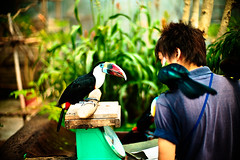 Confidant (moaan) Tags: leica bird digital 50mm toucan eyecontact dof talk f10 utata perch conversation noctilux contact m9 kachoen rapport perching  2011 tocotoucan bpkeh  leicanoctilux50mmf10 kobekachoen leicam9 gettyimagesjapanq4