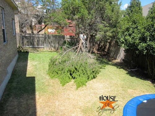 yard_work_tree_cutting_08