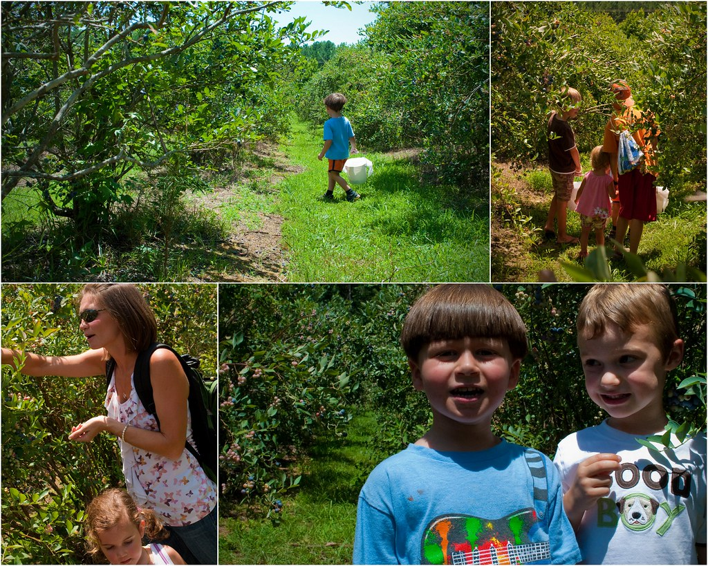BlueberryPickingJuly20111