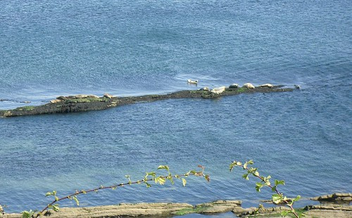 Seals 3