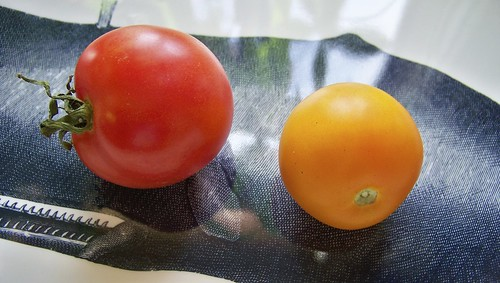 Next-Door Tomatoes