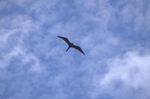 Flying Frigate