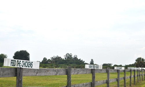 Entrance to Henscratch Farms, Lake Placid, Fla.