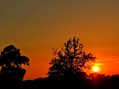 Clear sky sunset (algo) Tags: trees sunset sky sun evening topf50 sundown silhouettes topv222 algo 50f 110929