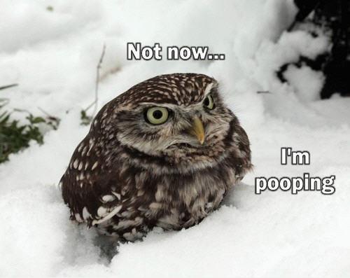 snowpoo