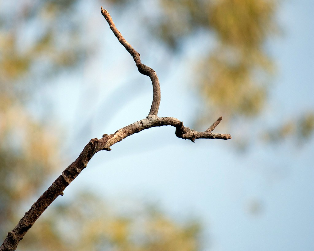 A branch and a bird