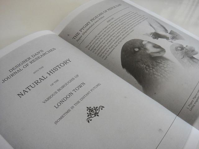 Designer dan - The Pygmy Pigeons of Penge East
