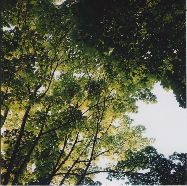 Film Trees.