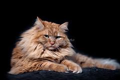 0001_flickr.jpg (mac.chia) Tags: santiago felini gatti animali