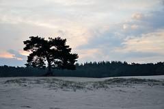 Lange Duinen, Soest (Pjerry ;)) Tags: sunset nature clouds sunrise landscape zonsondergang nikon thenetherlands wolken nikkor langeduinen soest zonsopkomst soestduinen d7000 pjerry