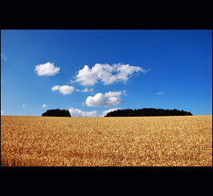 summer :) (klaus53) Tags: trees summer sky field clouds nikon loweraustria buckligewelt
