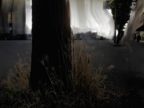 O Wild Grasses